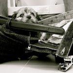 perrito Betty en el baño